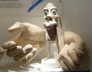 "The motor homunculus is a ""little man"" map that shows how the areas of the brain allocate more control over certain areas of the body, like the hands and mouth."
