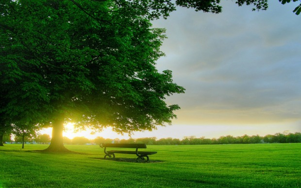 Good-Morning-Green-Nature-Scene-Picture-4765